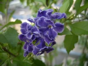 綺麗な花に逢いたくて