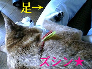 婆やの脚の上で、まどろむお犬様
