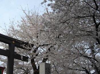 Sakura2008_2