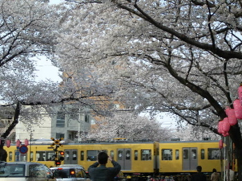 Sakura2008_4