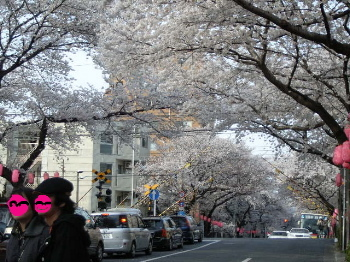 Sakura2008_5