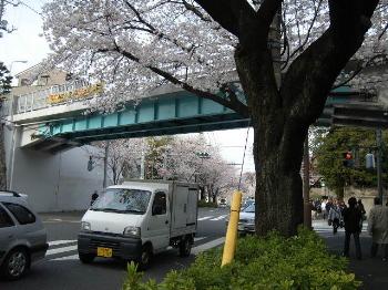 Sakuranokuni