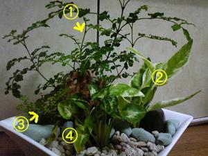 観葉植物の寄せ植え その2