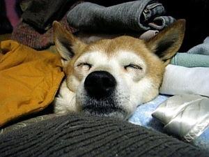 絶賛熟睡中。