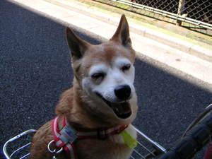 モモ、笑顔満開♪