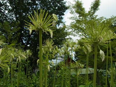 屋上庭園の植物