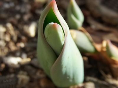 ナラリーノ国の春☆2015(ベランダ編)