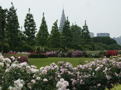 新宿御苑の薔薇6