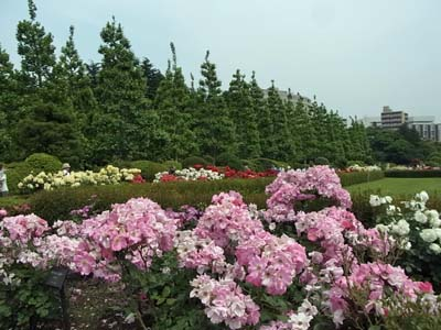 新宿御苑の薔薇2