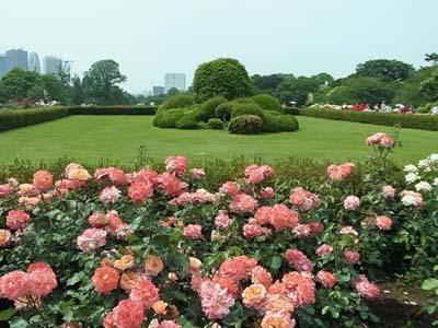 新宿御苑の薔薇1